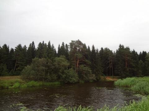 Участок с выходом в р.Волга, д.Нутромо 128 сот, газ, эл-во
