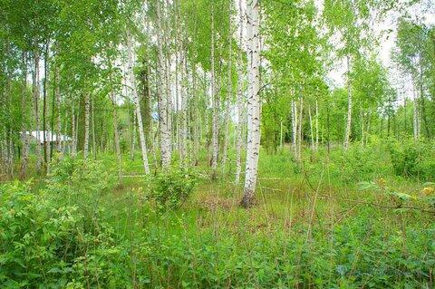 Лесной участок 12 соток в СНТ