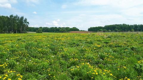 1га для ЛПХ, окраина деревни Ненашево, граничит с оврагом и прудиком