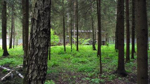 Экслюзивное предложение. Лес тишина большая вода. В 7 км от МКАД !