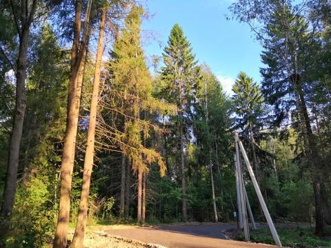 Продаётся земельный участок 10 сот. с лесными деревьями -35 км от МКАД
