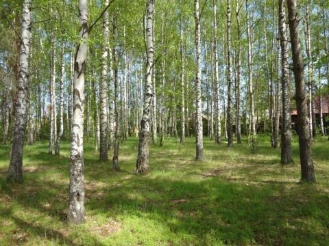 Эксклюзивный участок на реке Волга