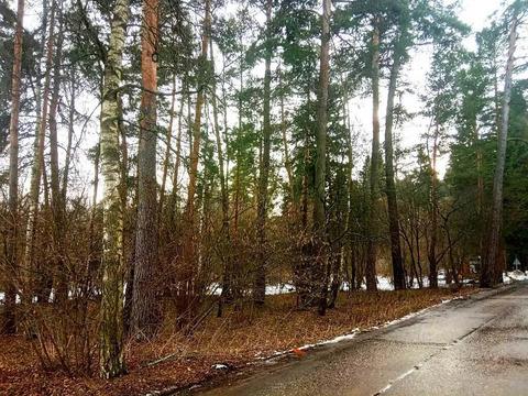 Участок с соснами рядом речка на Рублевке