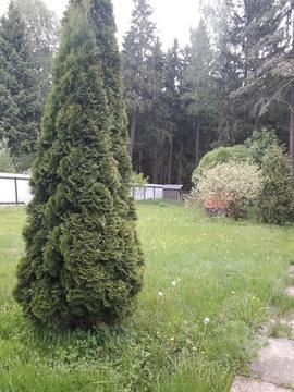 Участок с домом в Терновке