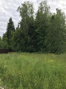 Продаю земельный участок с лесными деревьями 11 соток в к/п