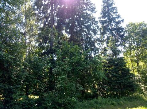 Участок с лесными деревьями в стародачном поселке, в тихом уютном мест
