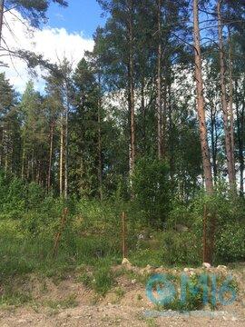 Живописный участок 46 соток на берегу озера Александровкого