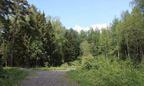 Большой участок с лесом около воды на Новорижском шоссе 18 км от МКАД