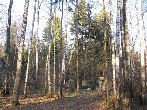 Лесной участок на Рублевке, тихое место в стародачном поселке