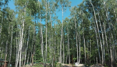 Продается земельный участок, Репниково, 8 сот