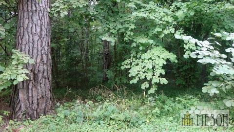 Продается лесной земельный участок (сосны)