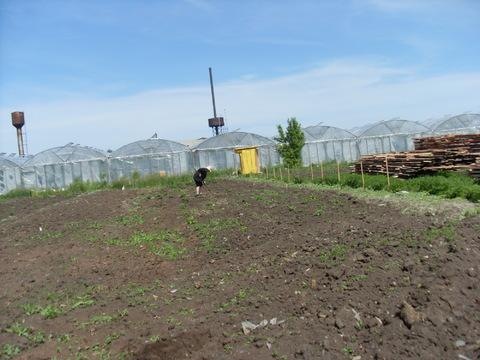 Земельный участок в п. Черницк