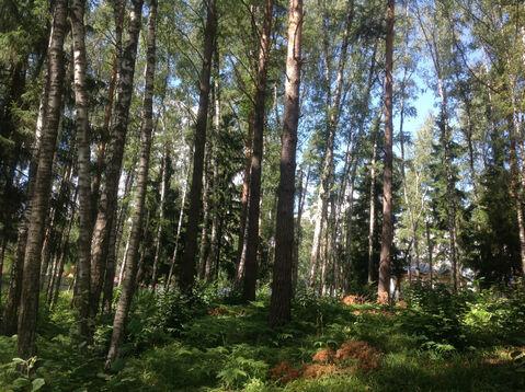 Д. Солослово кп ДПК «Гранит» красивый рельефный лесной участок 1.13 Га
