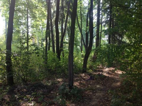 Участок с лесными деревьями 6 соток в с. Талеж