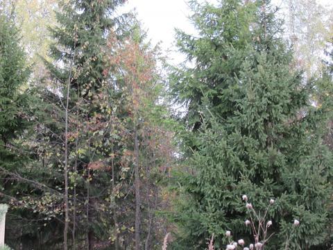 Лесной участок 13 сот, поселок
