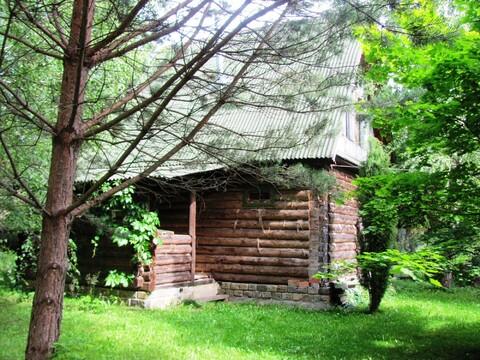 Дом баня в окружении леса